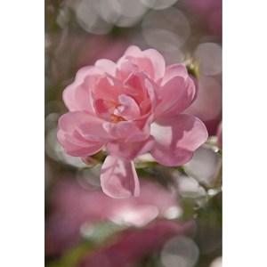 Фотообои Komar Bouquet 184 х 254см. (4-713)
