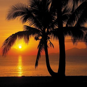 Фотообои Komar Palmy Beach Sunrise 368 х 254см. (8-255) фотообои komar beach resort 368 х 254см 8 921