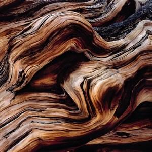 Фотообои Komar Scenics National Geographic Edition 1 8-панельные (8-520)