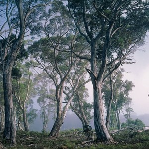 Фотообои Komar Fantasy Forest 368 х 254см. (8-523) фотообои komar brooklyn b w 368 х 254см 8 934
