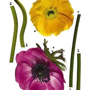 Наклейка декоративная Komar Scenics National Geographic Edition 1 5-частей 0.5х0.7м (17012)