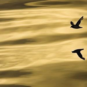 Фотообои Komar Scenics National Geographic Edition 1 (1-604)