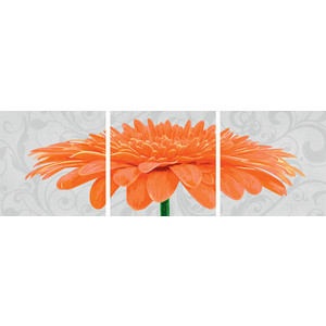 Раскраска Schipper Триптих хризантема крупноцветковая оранжевая (9400684)