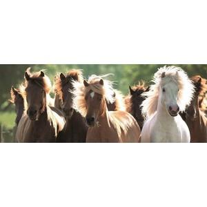 Пазл Ravensburger панорамный Дикие лошади (15091) clementoni пазл hq дикие лошади 1500