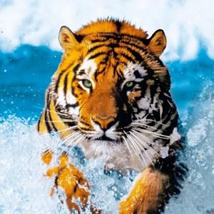 Фотообои W+G Turdecor Bengal Tiger 86x200 см (00590-1WG)