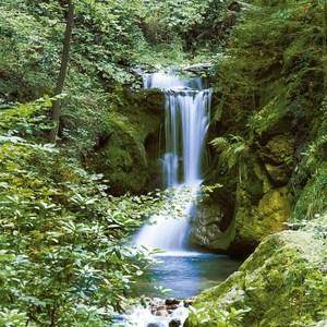 Фотообои W+G Waterfall in Spring 4 части 183x254 см (00364WG)