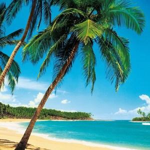 Фотообои W+G Ile Tropicale 8 частей 366 x 254 см (00241WG)