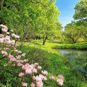 Фотообои W+G Park in the Spring 8 частей 366 x 254 см (00136WG)