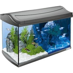 Аквариумный комплекс Tetra AquaArt LED Discover Line Tropical с LED освещением день / ночь 60л cudgi футболка поло cudgi cts15 1419 синий белый