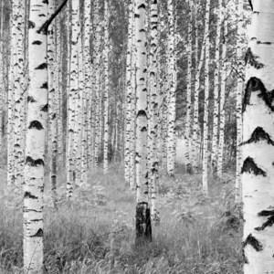 Фотообои Komar Woods (3,68х2,48 м) (XXL4-023) фотообои komar la maison 3 68х2 48 м xxl4 034