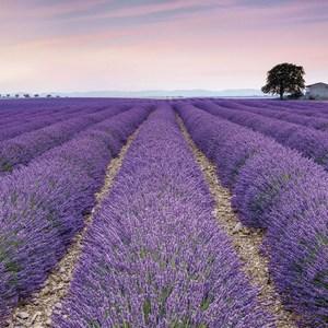 Фотообои Komar Provence (3,68х2,48 м) (XXL4-036)