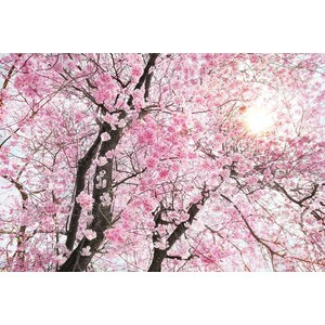 Фотообои Komar Bloom (3,68х2,48 м) (XXL4-046) batman volume 9 bloom
